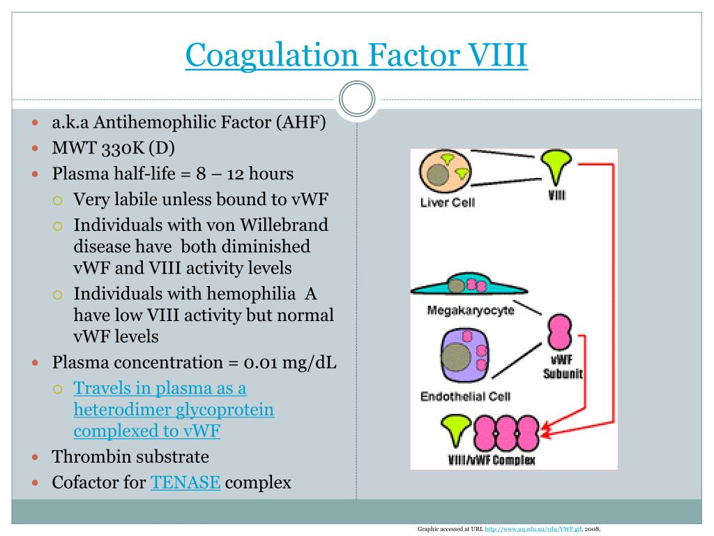 Coagulation Factor VIII