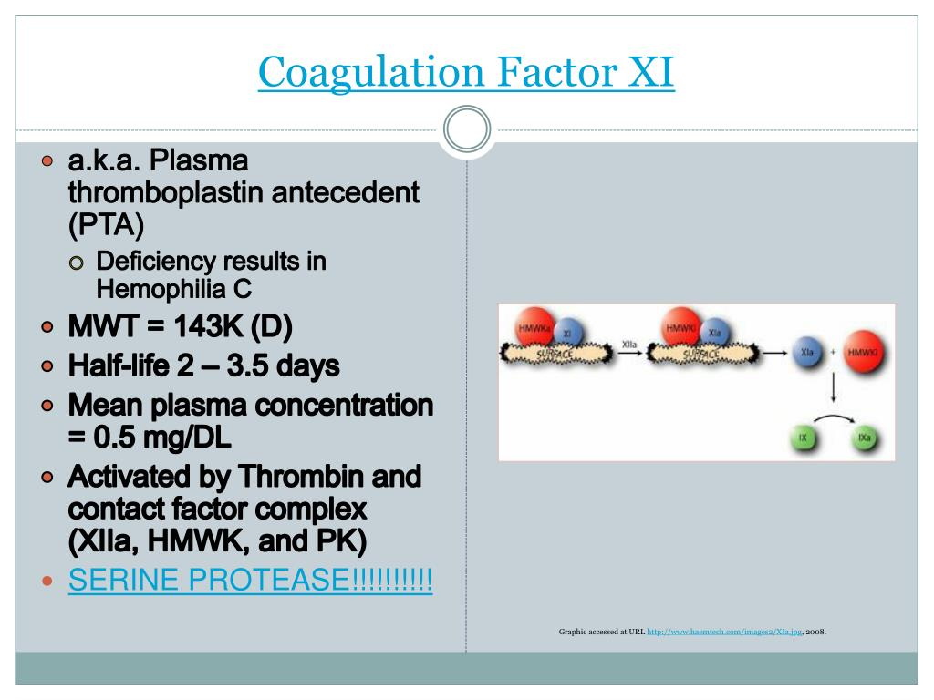 Coagulation Factor XI