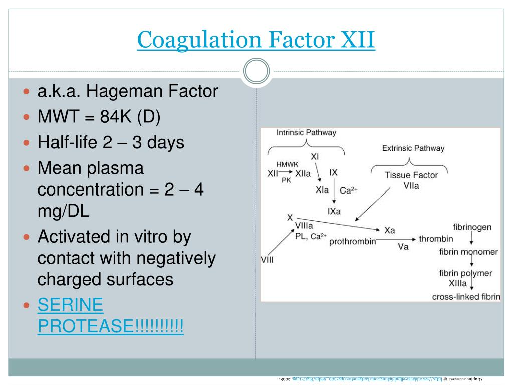 Coagulation Factor XII