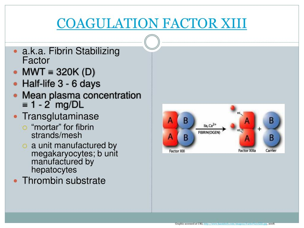COAGULATION FACTOR XIII