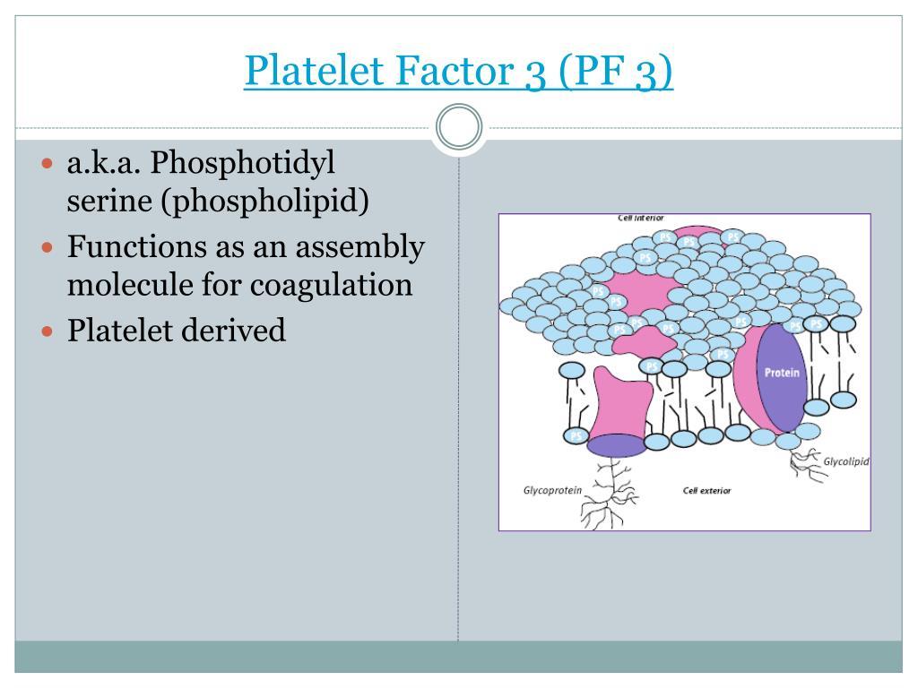 Platelet Factor 3 (PF 3)