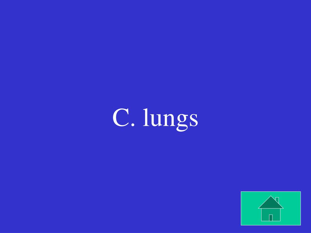 C. lungs