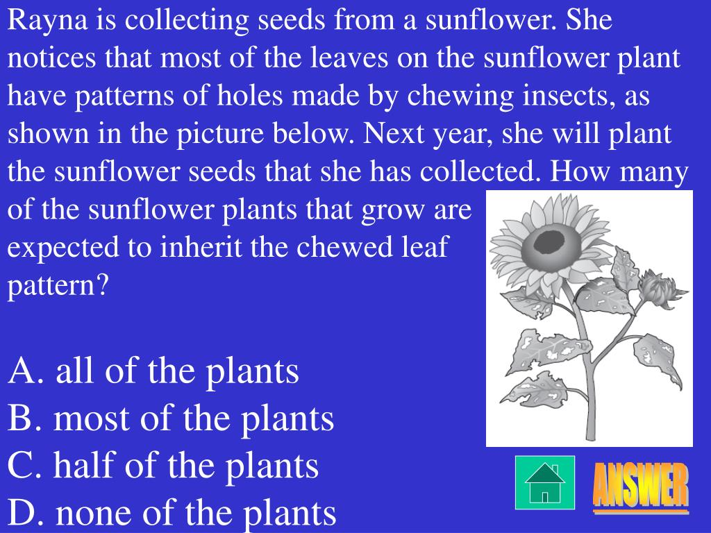 Rayna is collecting seeds from a sunflower. She notices that most of the leaves on the sunflower plant have patterns of holes made by chewing insects, as shown in the picture below. Next year, she will plant the sunflower seeds that she has collected. How many of the sunflower plants that grow are