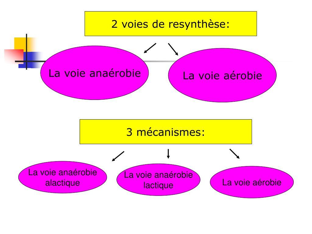 2 voies de resynthèse: