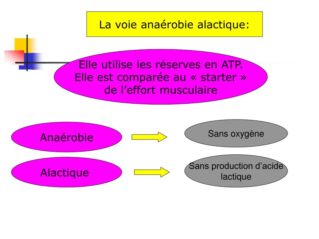 La voie anaérobie alactique: