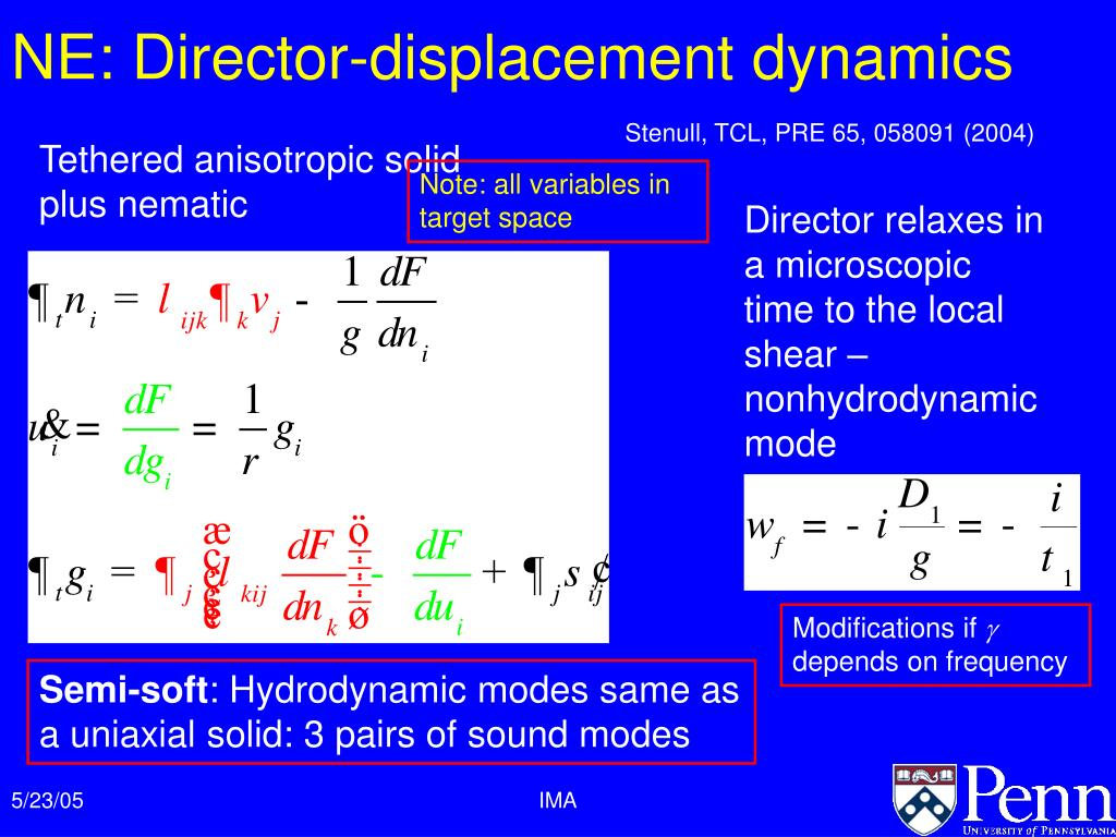 NE: Director-displacement dynamics