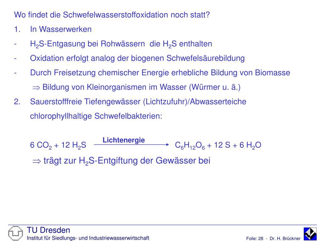 Wo findet die Schwefelwasserstoffoxidation noch statt?