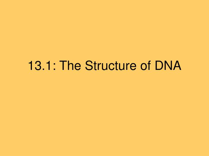 13 1 the structure of dna l.jpg