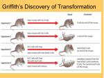 griffith s discovery of transformation