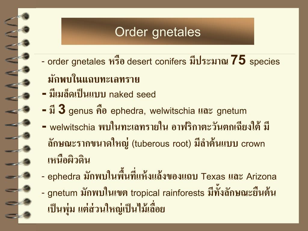 Order gnetales