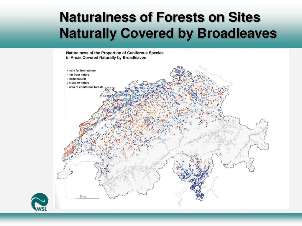 Naturalness of Forests on Sites Naturally Covered by Broadleaves