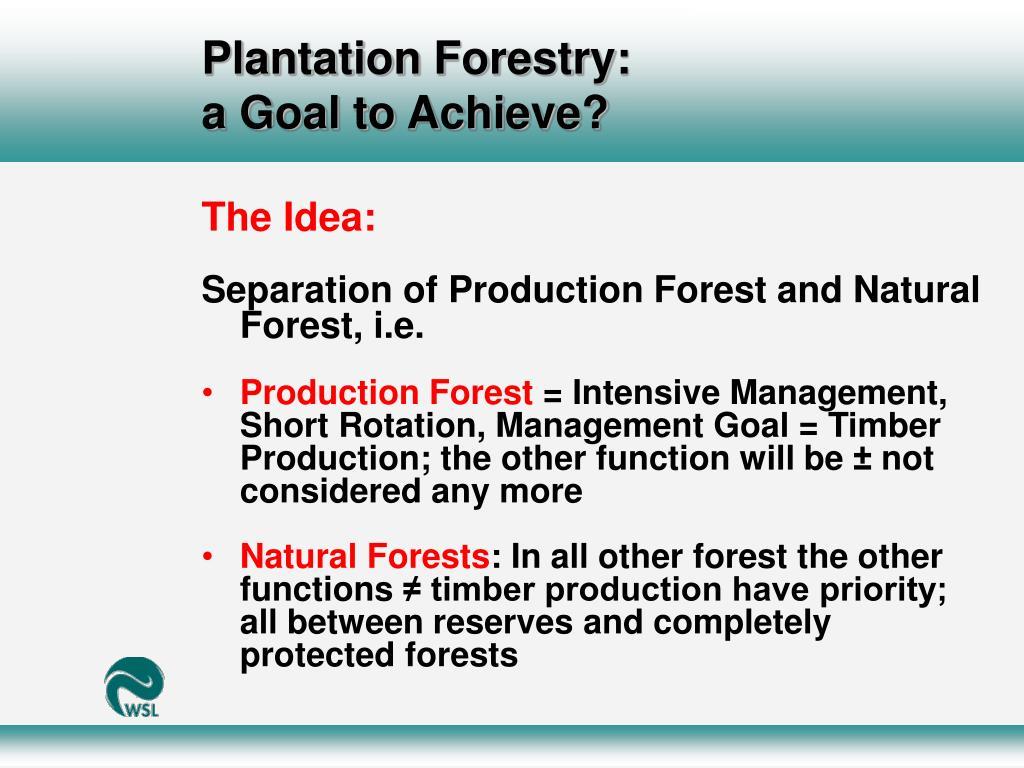 Plantation Forestry: