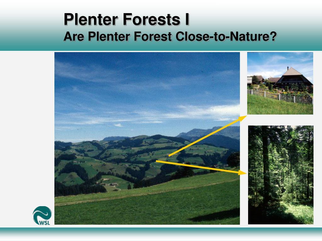 Plenter Forests I
