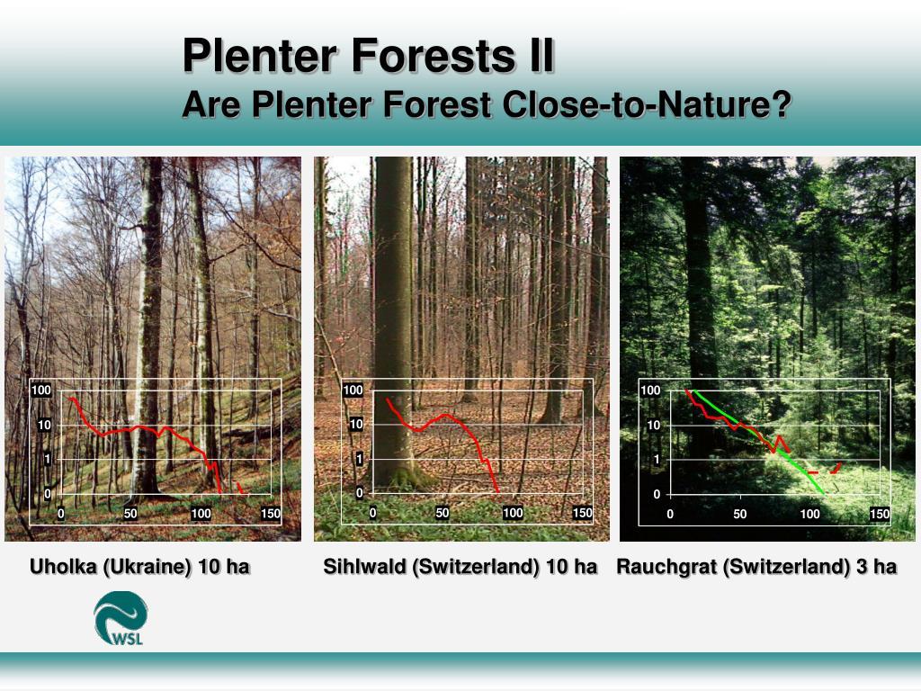 Plenter Forests II