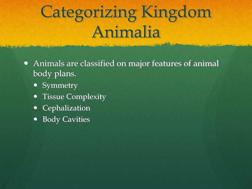 Categorizing Kingdom Animalia