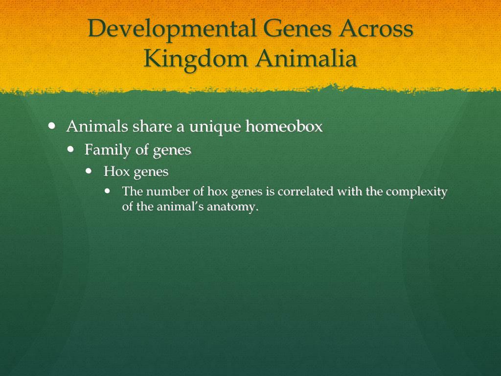 Developmental Genes Across Kingdom