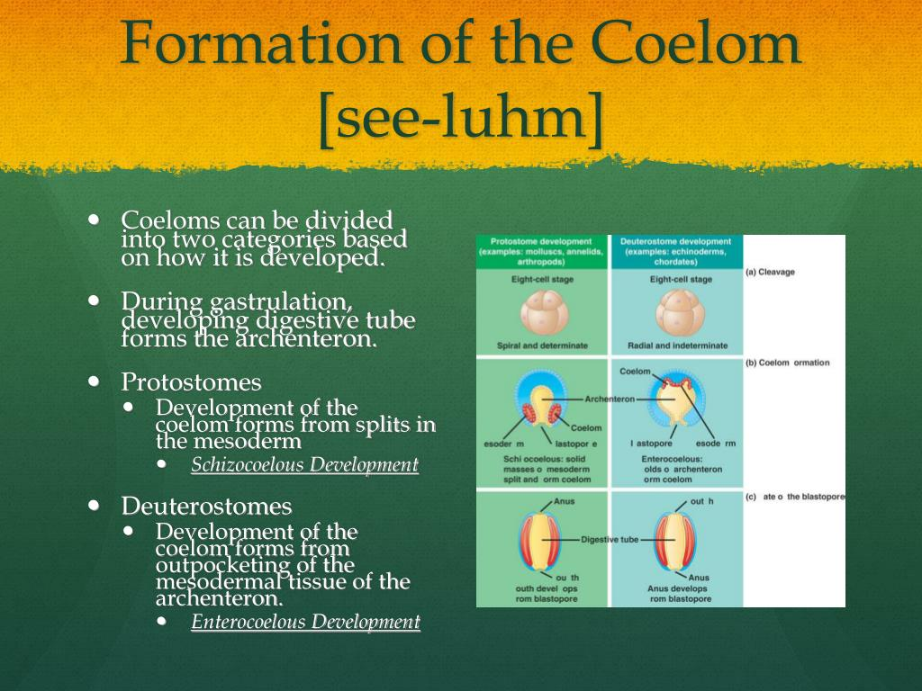Formation of the
