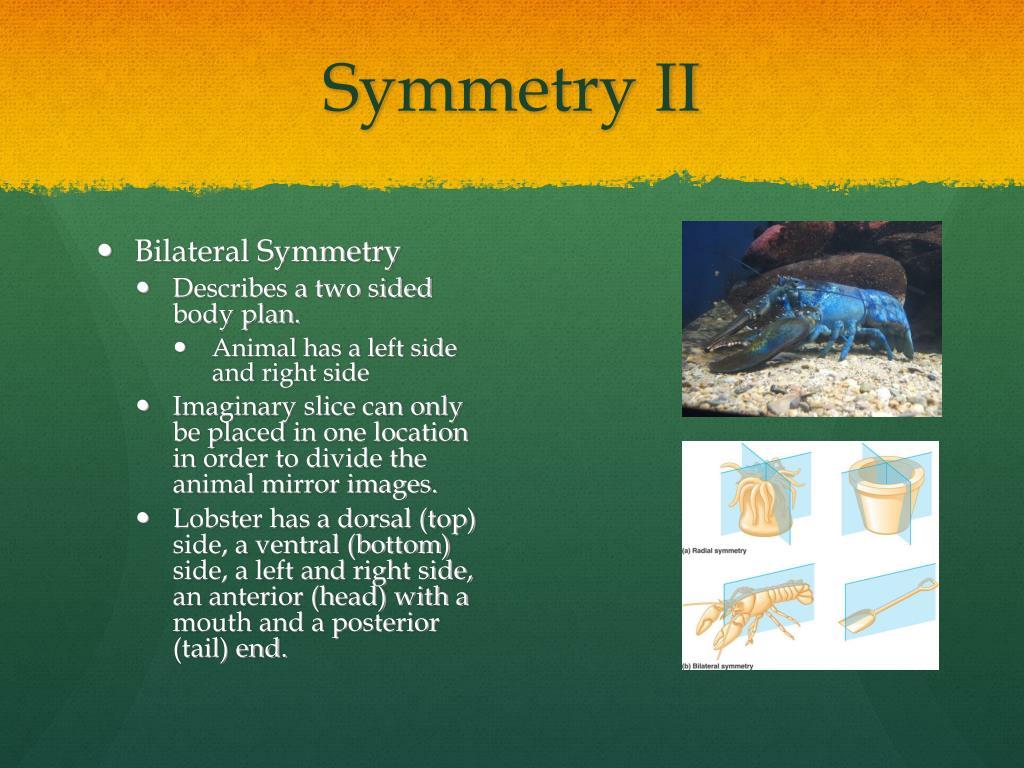 Symmetry II