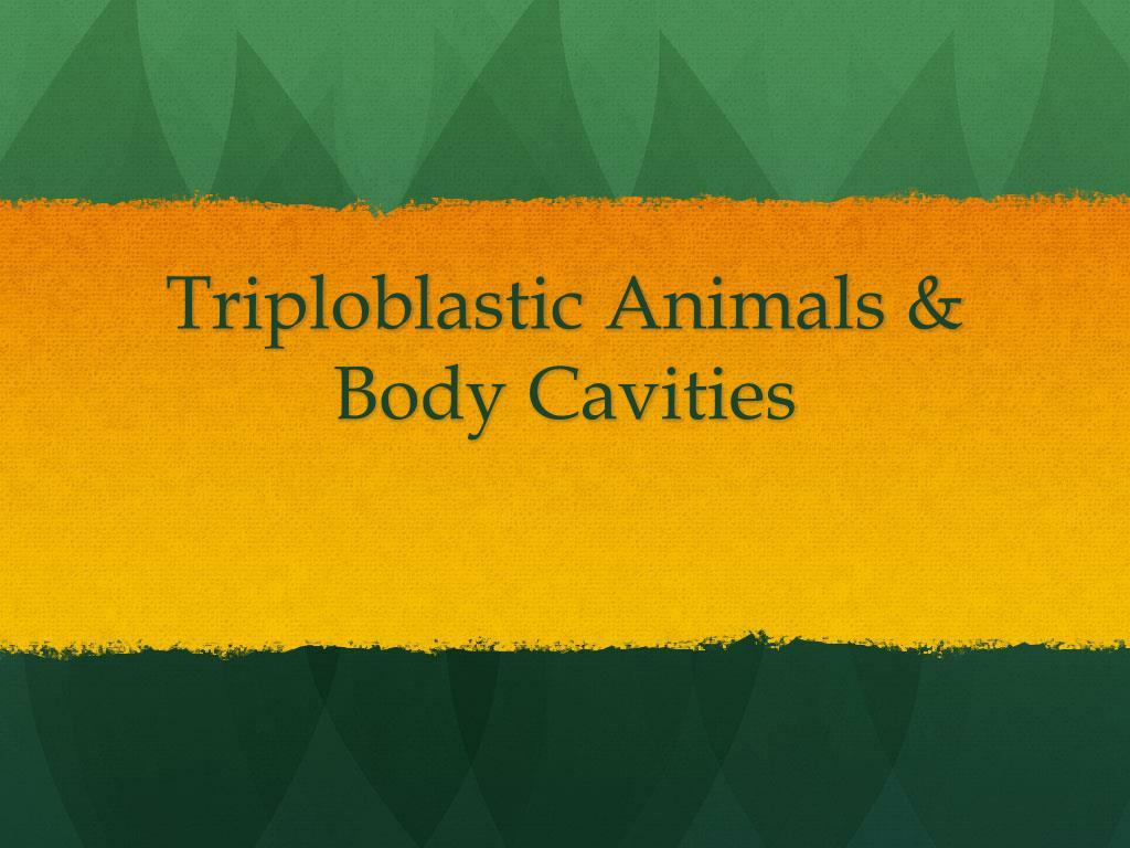 Triploblastic