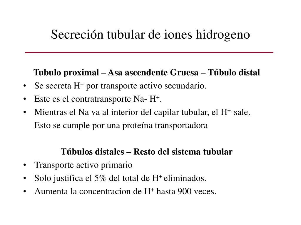 Secreción tubular de iones hidrogeno