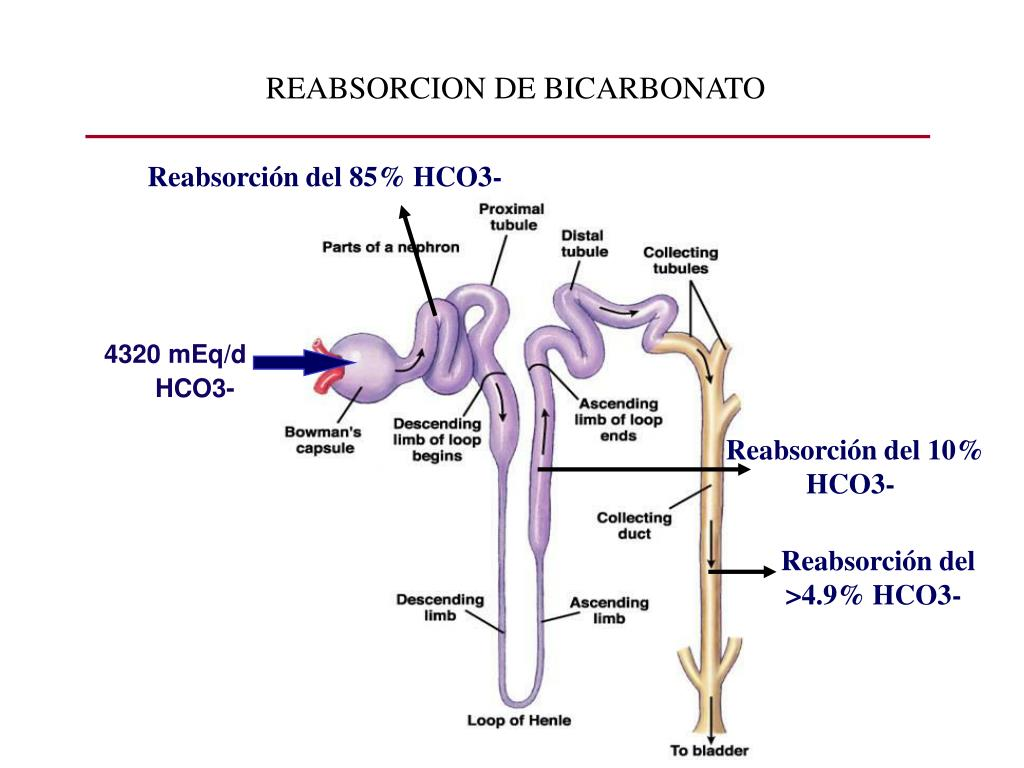 REABSORCION DE BICARBONATO