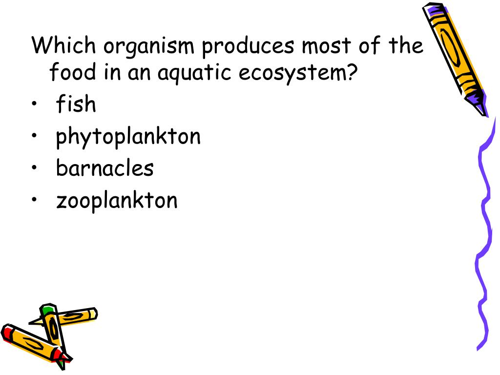 Which organism produces most of the food in an aquatic ecosystem?