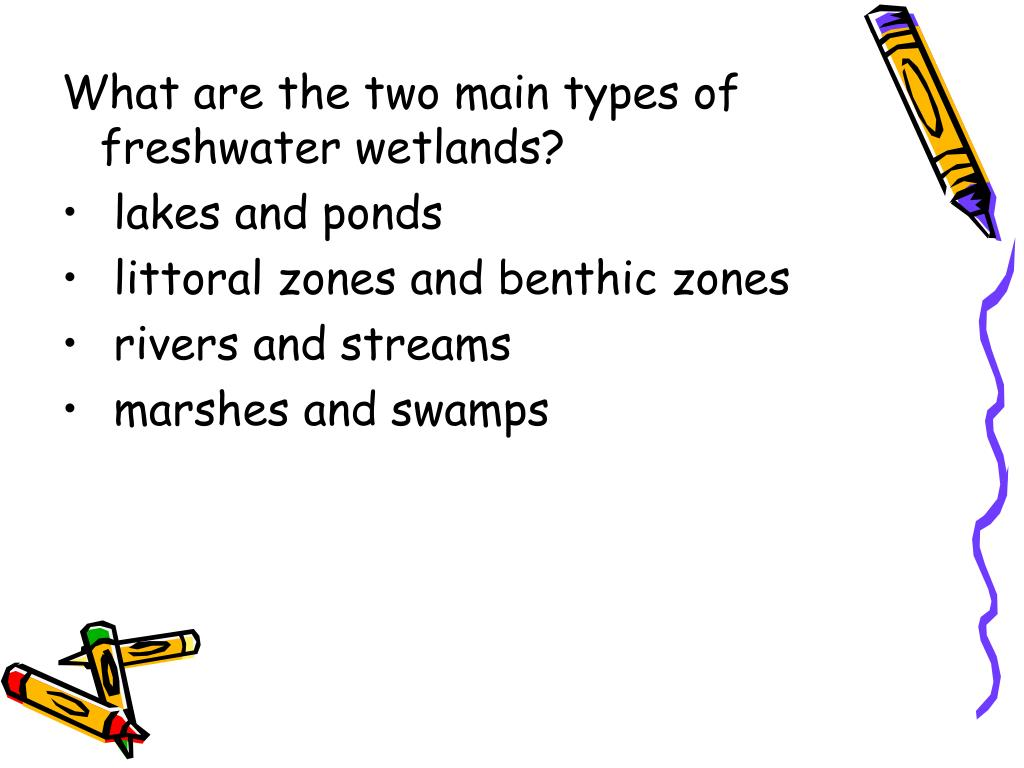 What are the two main types of freshwater wetlands?