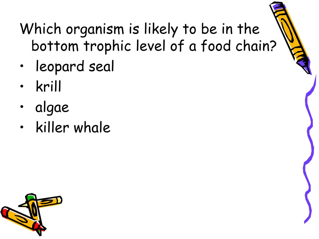 Which organism is likely to be in the bottom trophic level of a food chain?