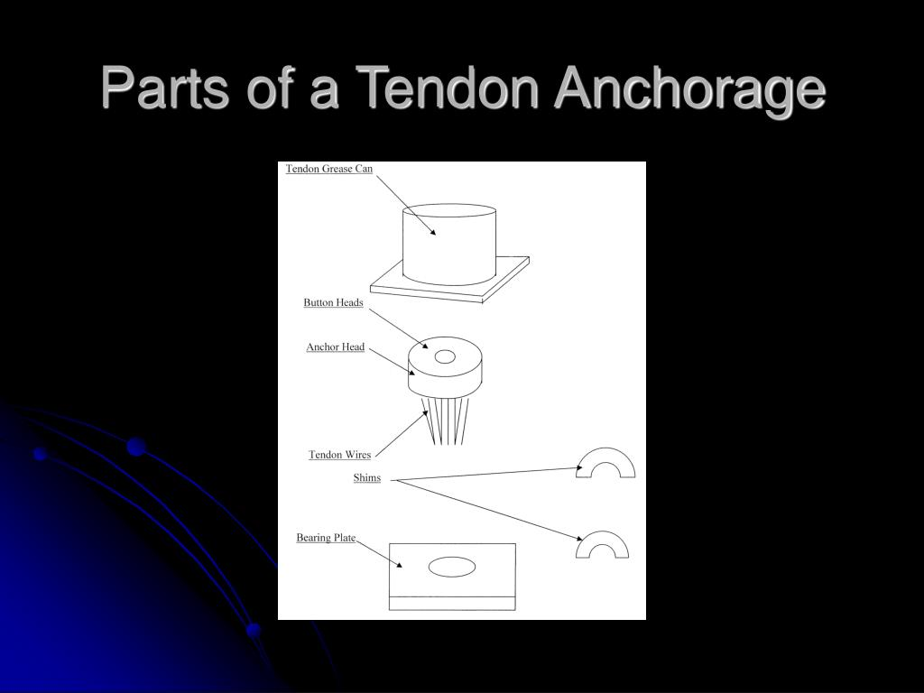 Parts of a Tendon Anchorage