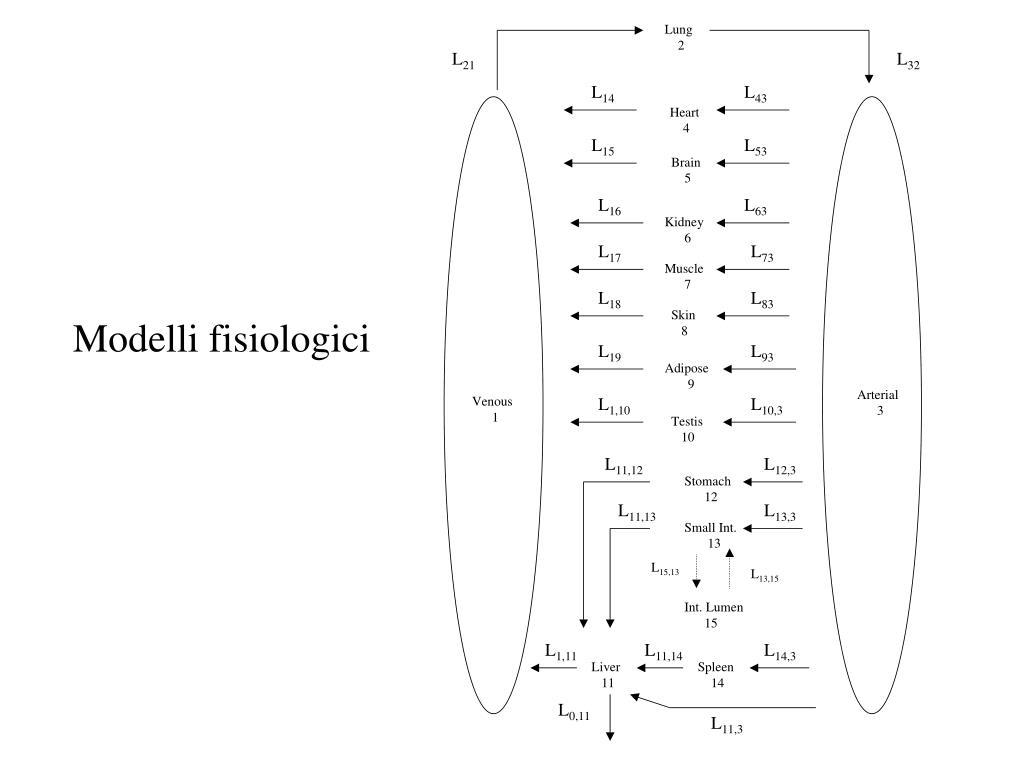 Modelli fisiologici