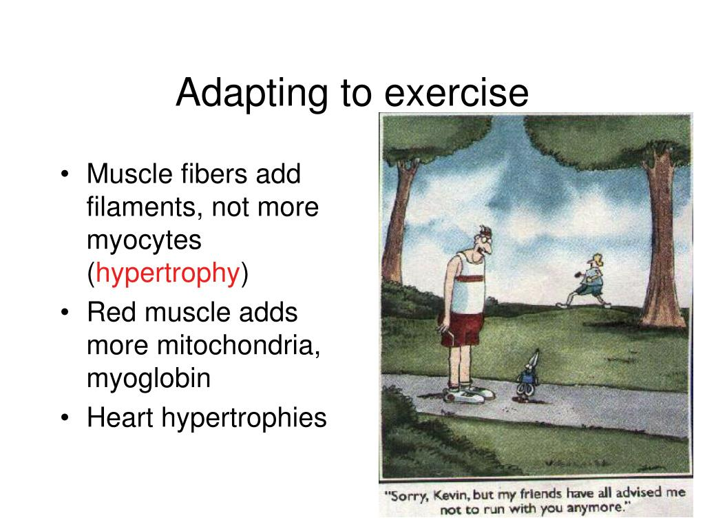 Adapting to exercise