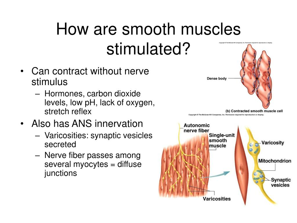 How are smooth muscles stimulated?
