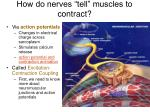 how do nerves tell muscles to contract