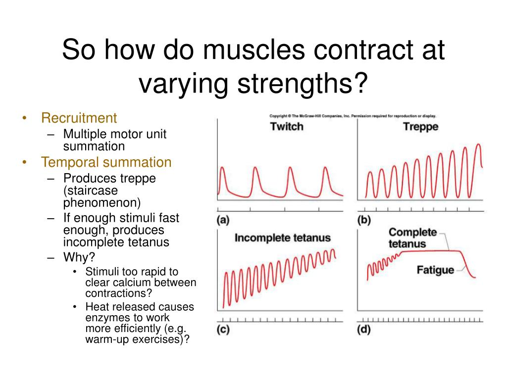 So how do muscles contract at varying strengths?