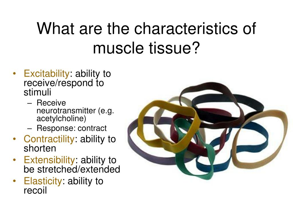 What are the characteristics of muscle tissue?