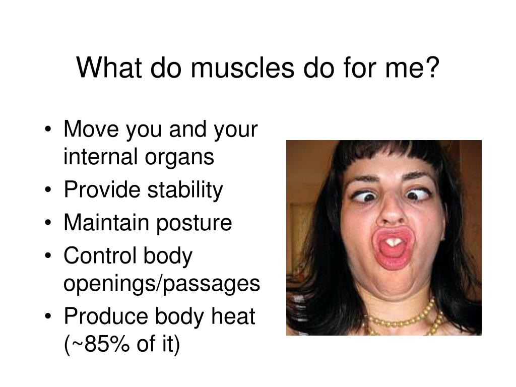 What do muscles do for me?