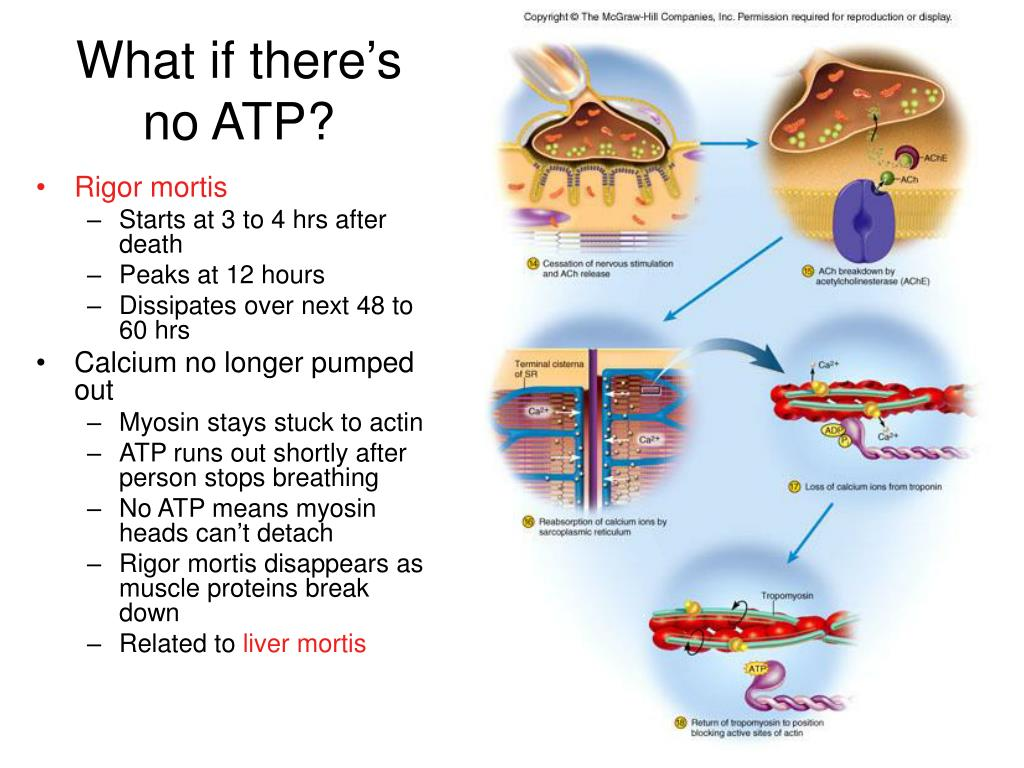 What if there's no ATP?
