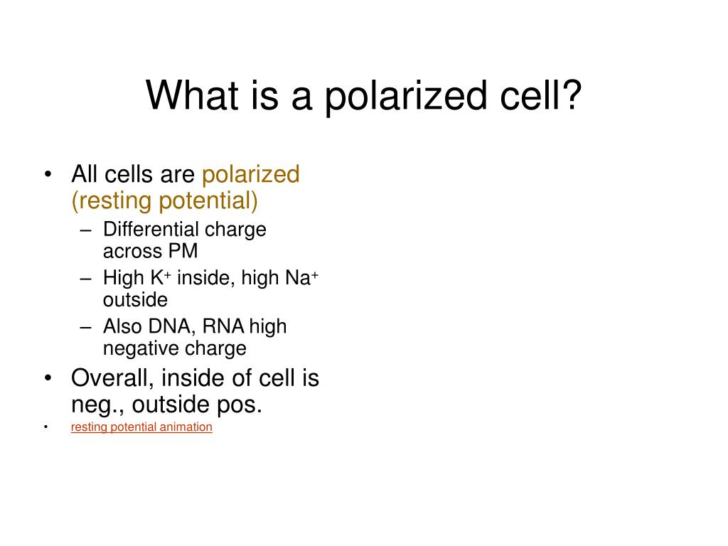What is a polarized cell?