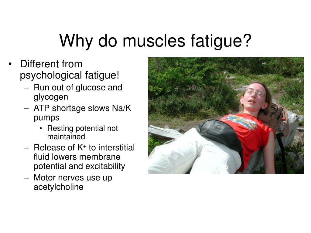 Why do muscles fatigue?