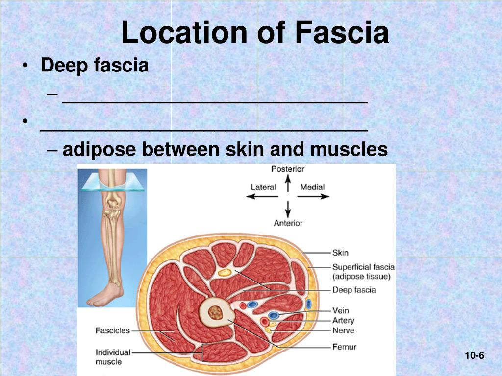 Location of Fascia
