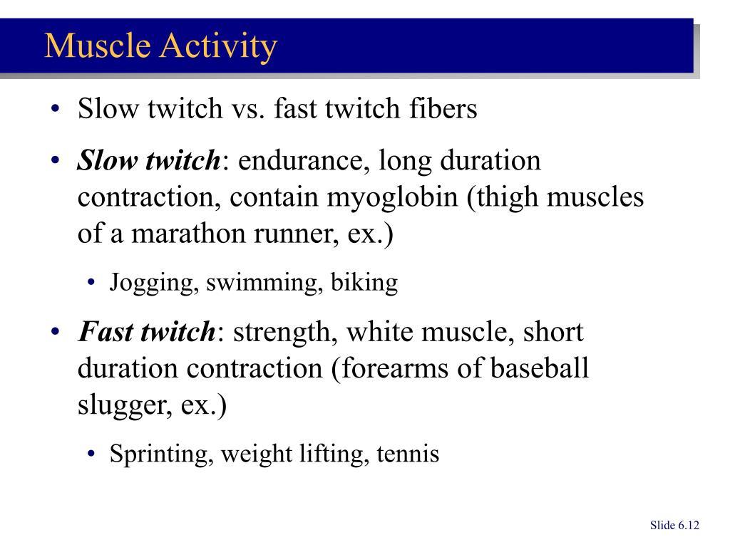Slow twitch vs. fast twitch fibers