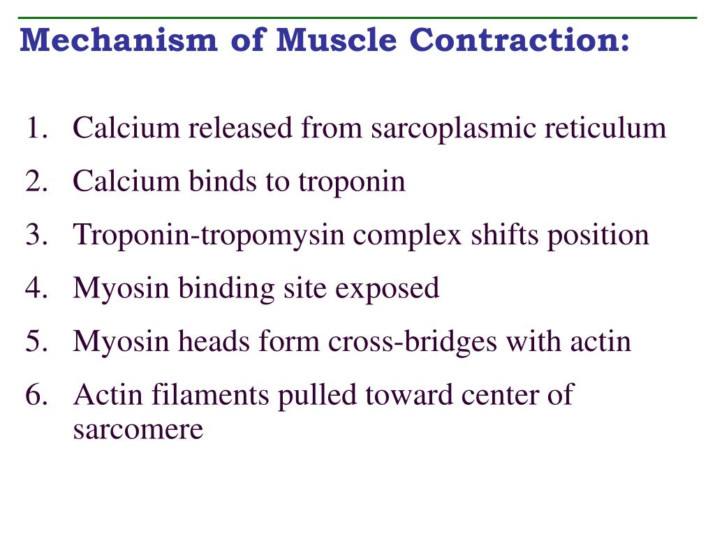 Mechanism of Muscle Contraction: