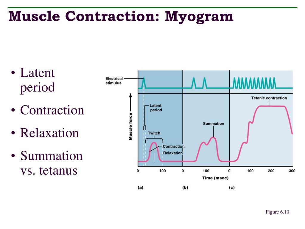 Muscle Contraction: Myogram