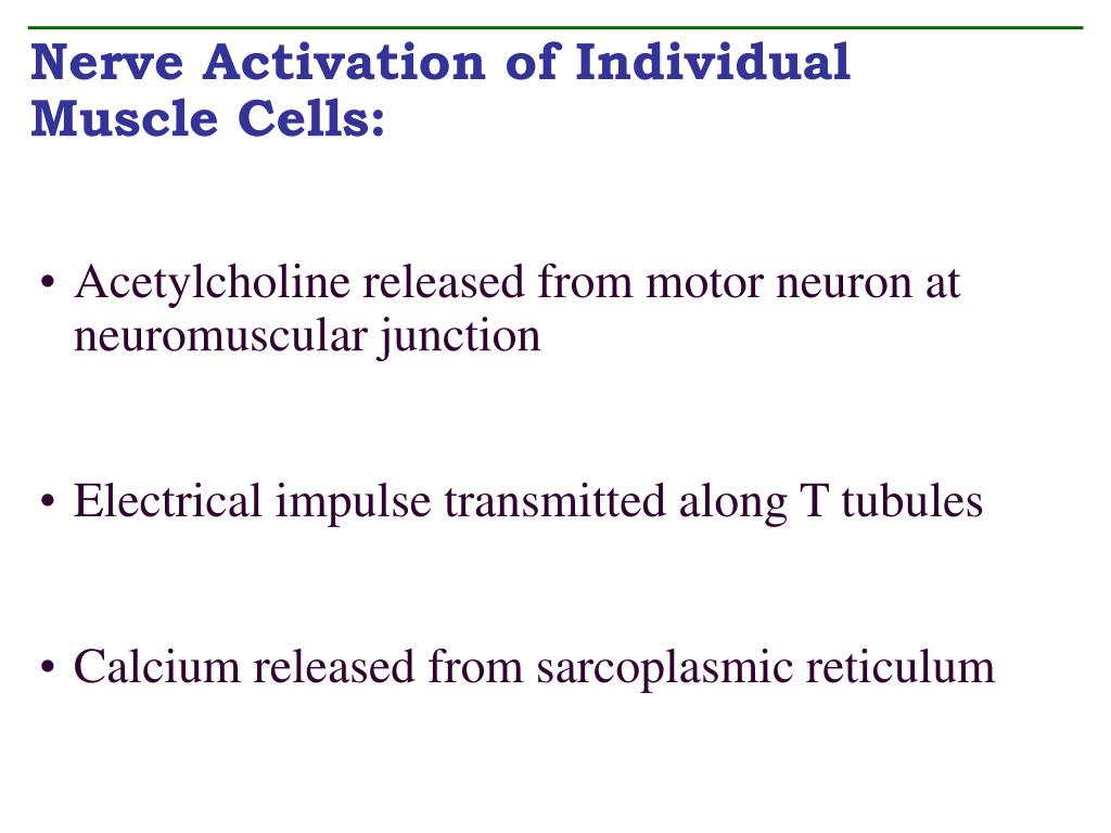 Nerve Activation of Individual Muscle Cells: