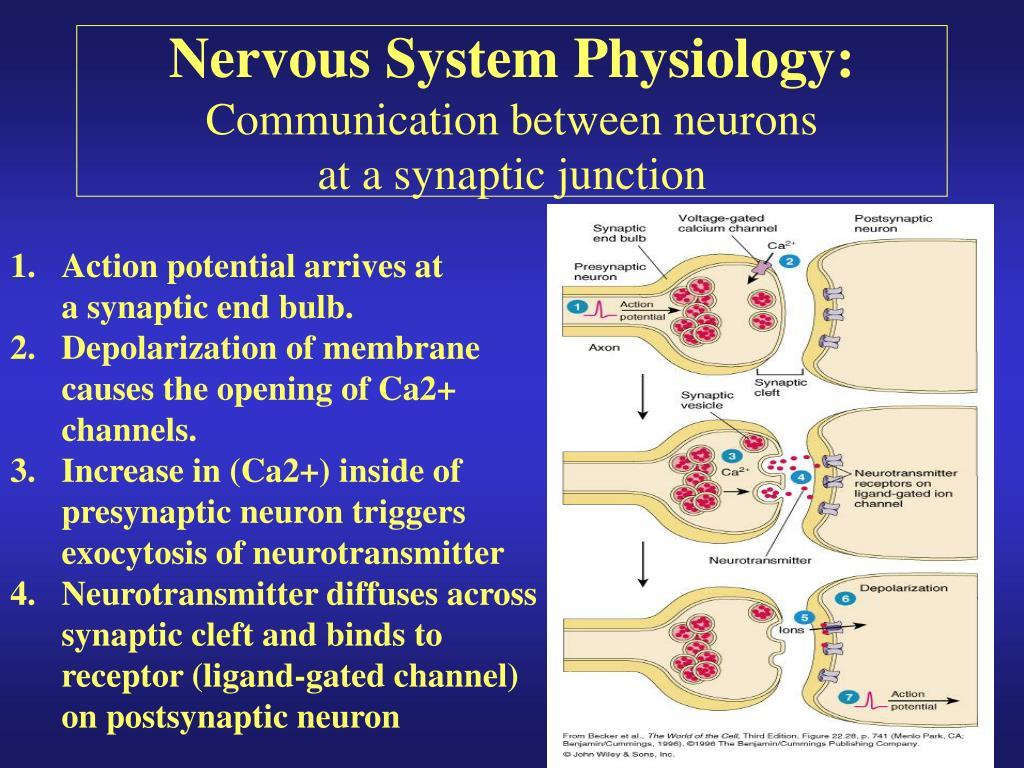 Systemic Physiology Coursework Help Cvcourseworkbfwufra Saunyfo
