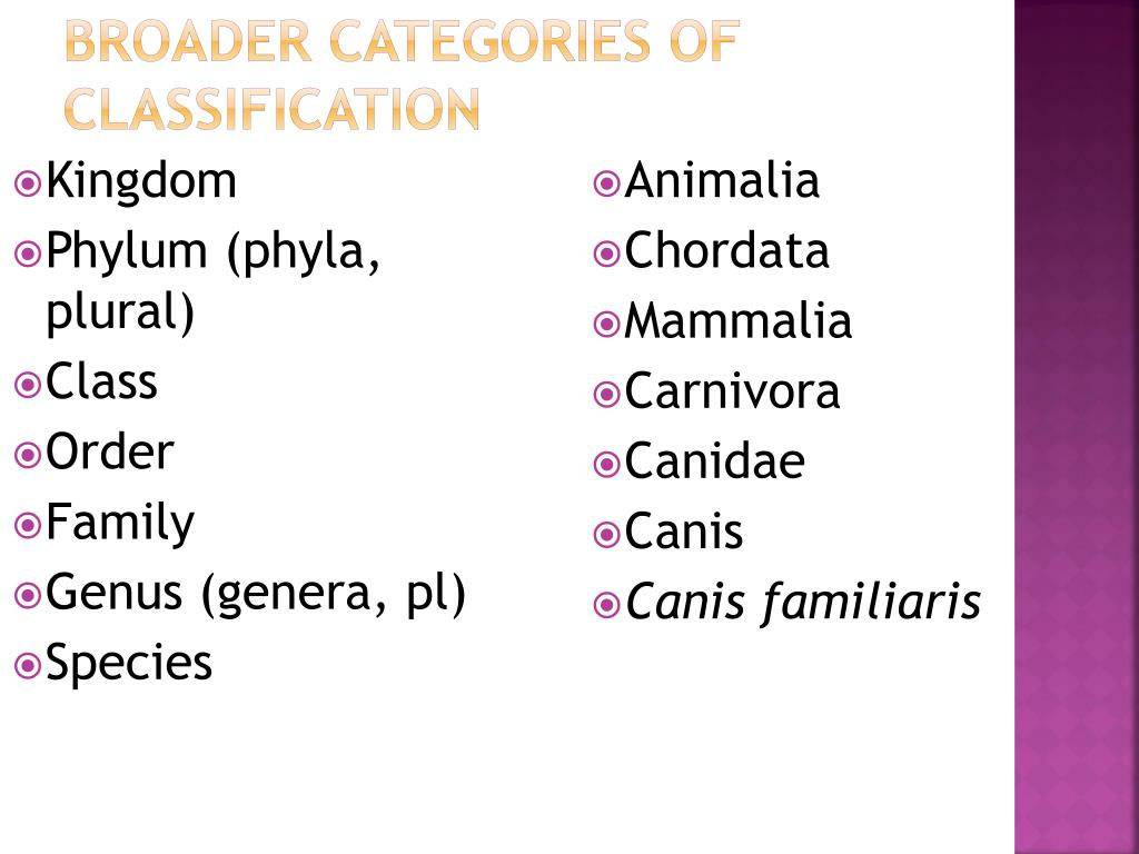 Broader categories of classification