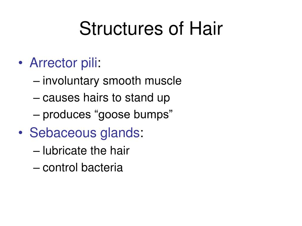 Structures of Hair