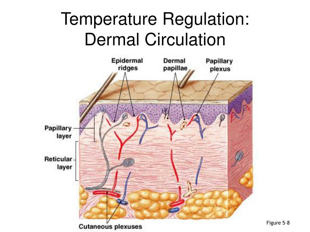 Temperature Regulation: