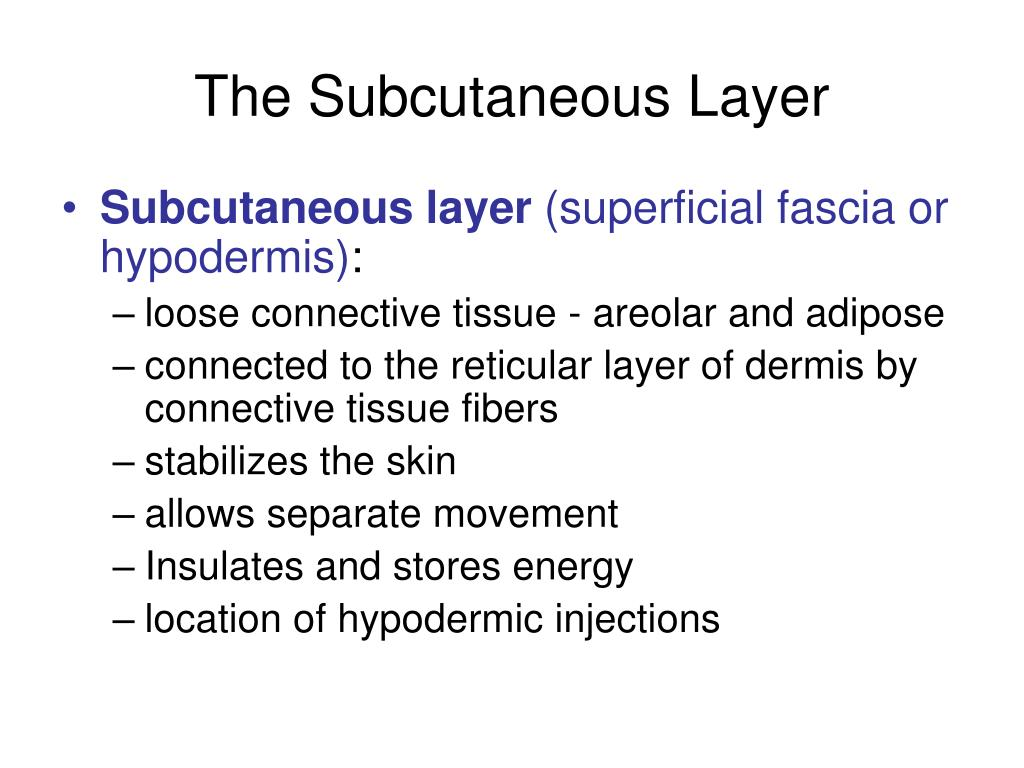 The Subcutaneous Layer