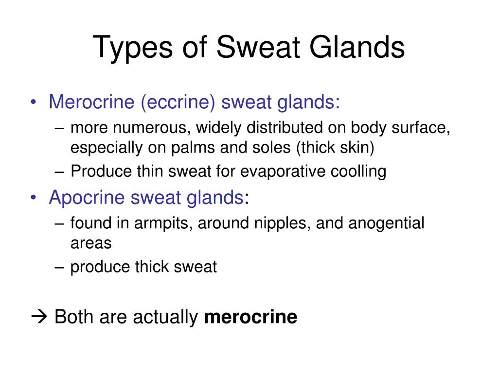 Types of Sweat Glands